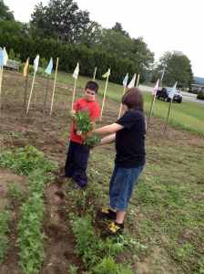 Dan showing Zach how to weed