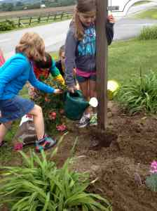 Grade 4 plantng donated rose bushes