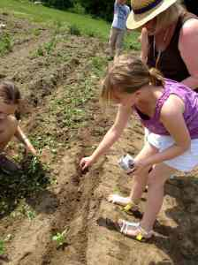 Planting basil grade 4