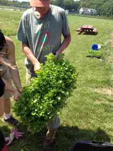 Planting celery gr 5