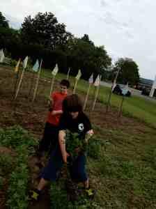 weeding boys