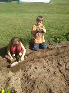 planting marigold border