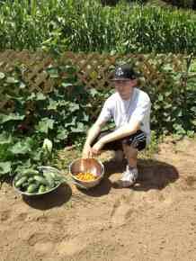 David's Tomato and Cuke Harvest