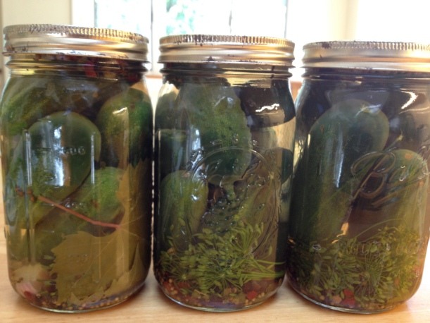 Pickles Ready for Curing