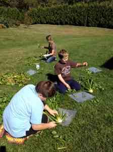 6th grade celery harvest