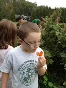eatng a nasturtium