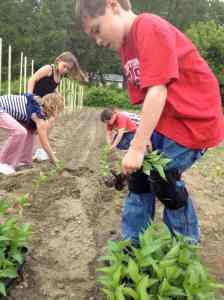 pepper planters in June