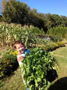 Jays celery