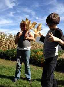 decorative corn harvest