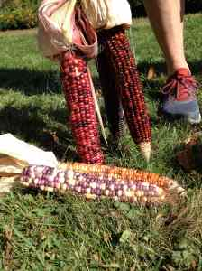 Indian corn colors