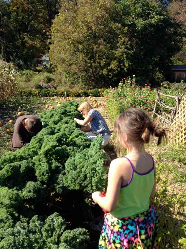 kale harvesters