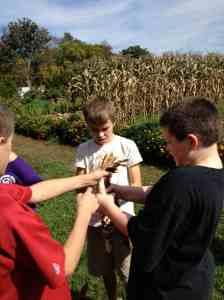 tying corn for drying