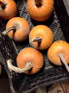 salvaged pumpkins