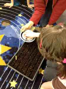 Planting basil seeds