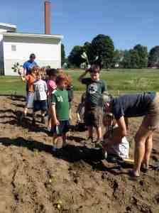 ASP planting cabbage