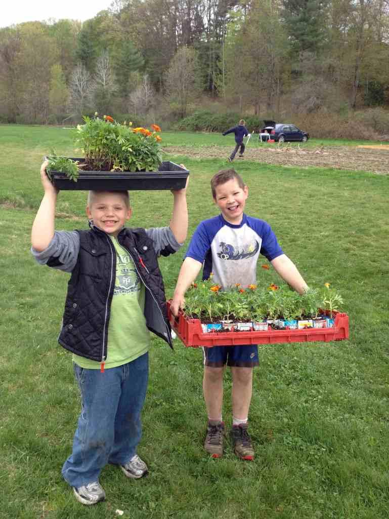 Happy marigold transplanters