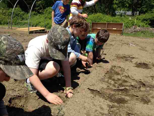 Team Second Grade       Planting Kale