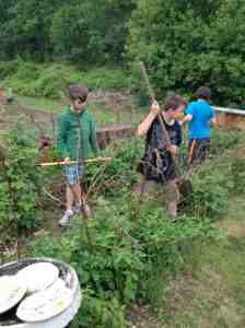 weeding raspberries