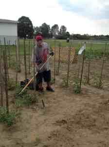 scraping weeds