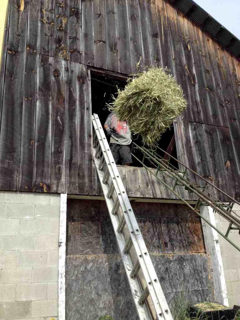 Harlow Farm Mulch