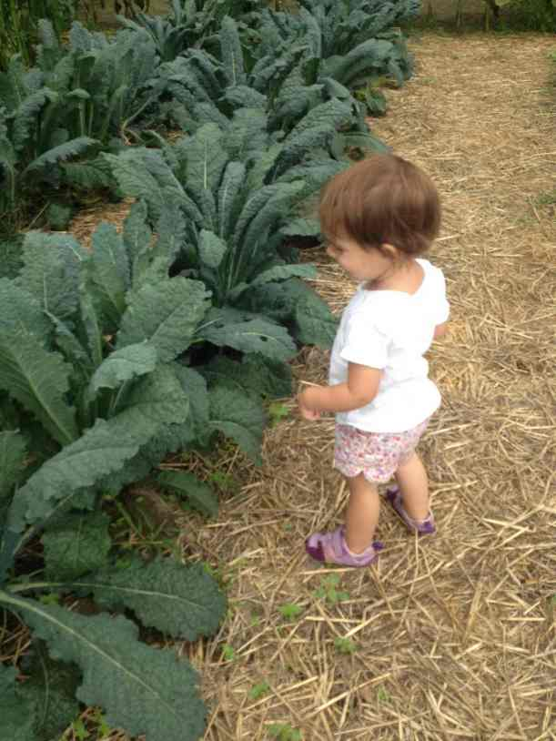 observing July kale harvest