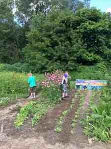weeding September crops