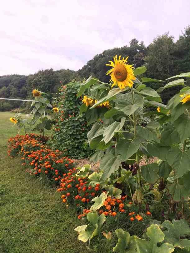 Our School Garden