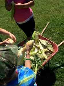 shuckng corn