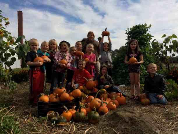 Pumpkin Harvesters