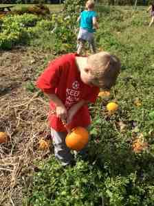finding the pie pumpkins