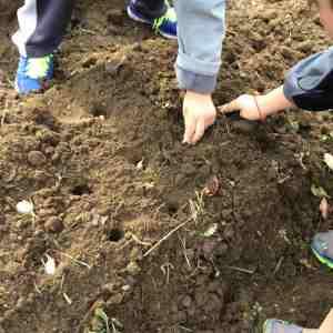 burying cloves