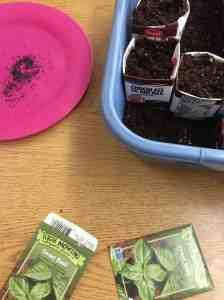 Planting Basil