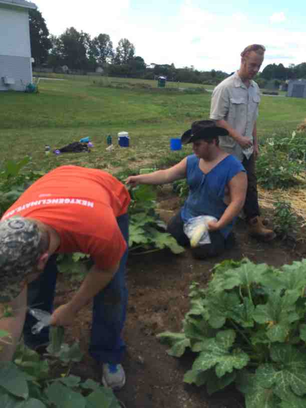 Youth Services crew harvests and weeds