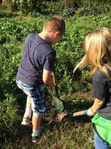 digging weeds