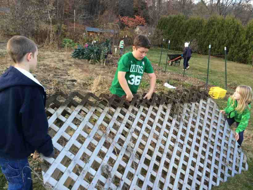 putting away cucumber trellis