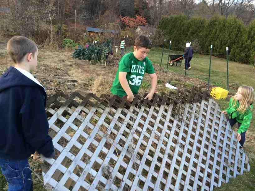 putting away cucumber trellis