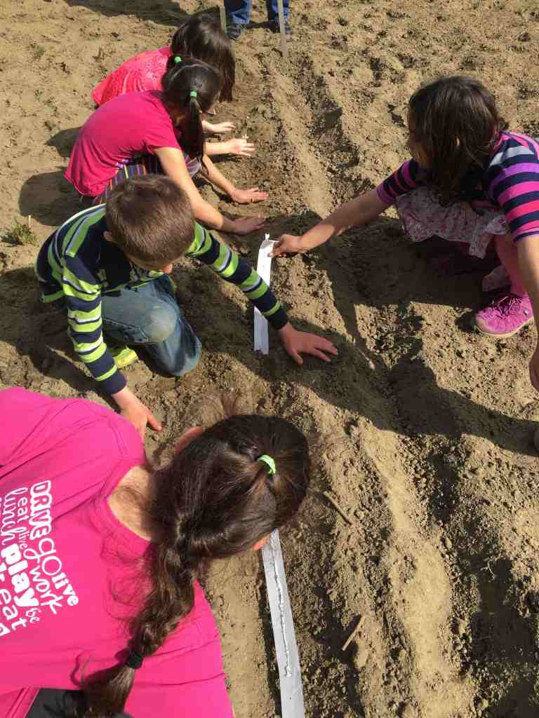 planting seed strips