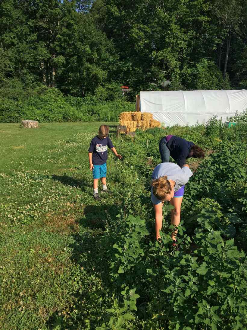 weeding squash with mandy and Sciaccas